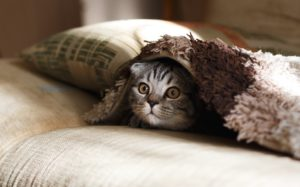 A cat hiding under a blanket.